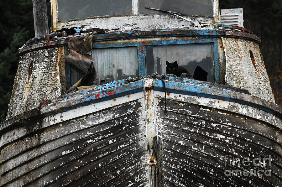 Fishing Boats Photograph - In Need Of Work by Bob Christopher