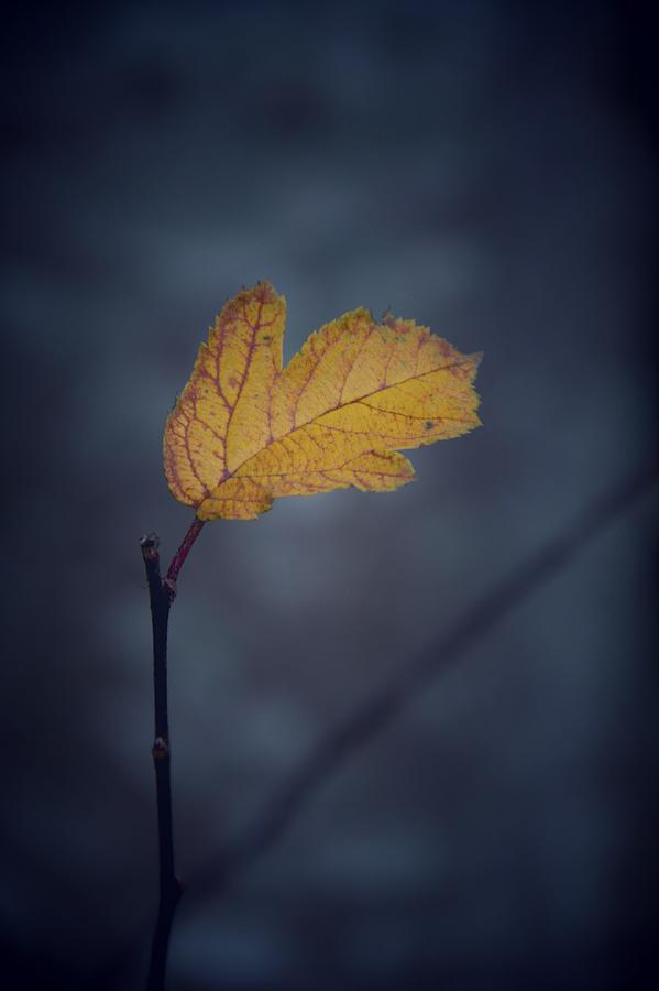 Leaf Photograph - In Space by Odd Jeppesen