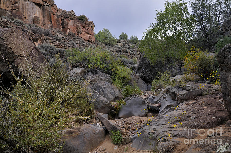 Landscape Photograph - In The Arroyo   by Ron Cline