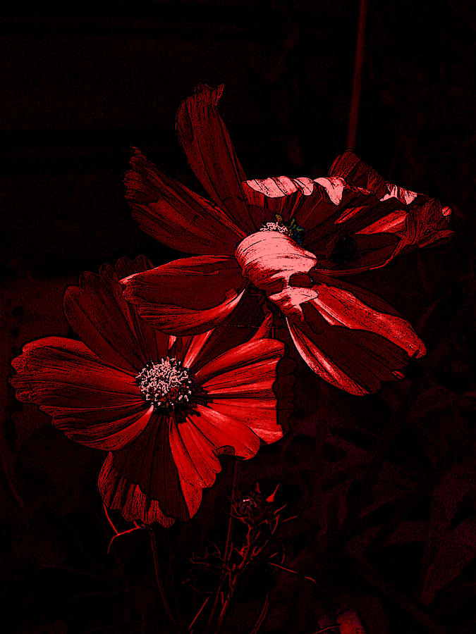 Flower Photograph - In The Cosmos by Yvonne Scott