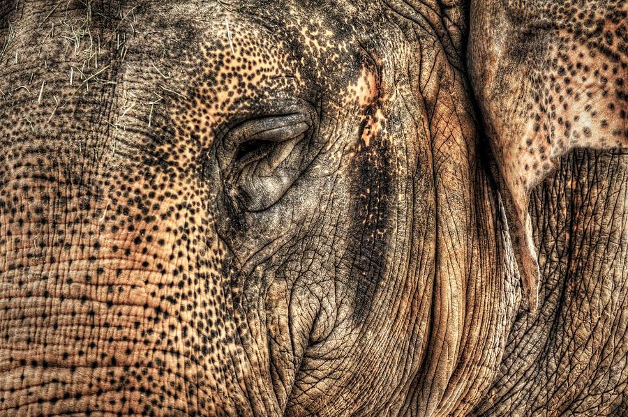 African Elephant Photograph - In The Eye Of The Beholder  by Saija  Lehtonen