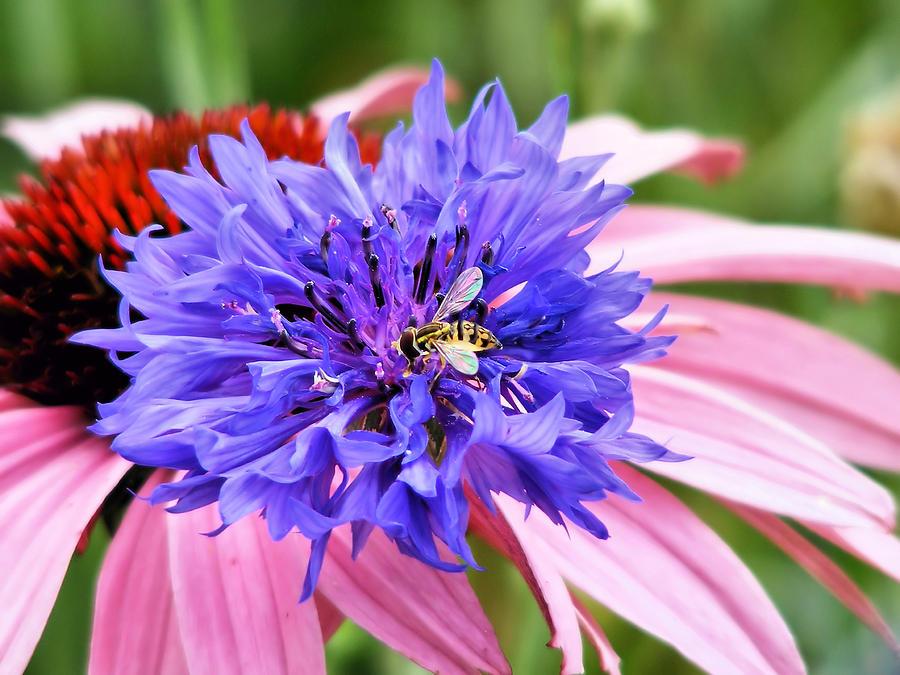 Garden Photograph - In The Garden by Tracey R Gates