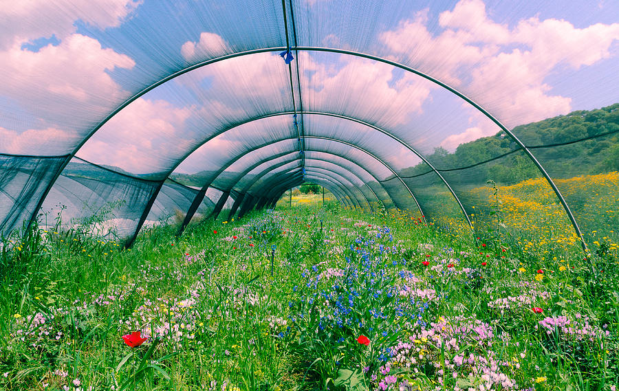 Agriculture Photograph - In the greenhouse by Michael Goyberg