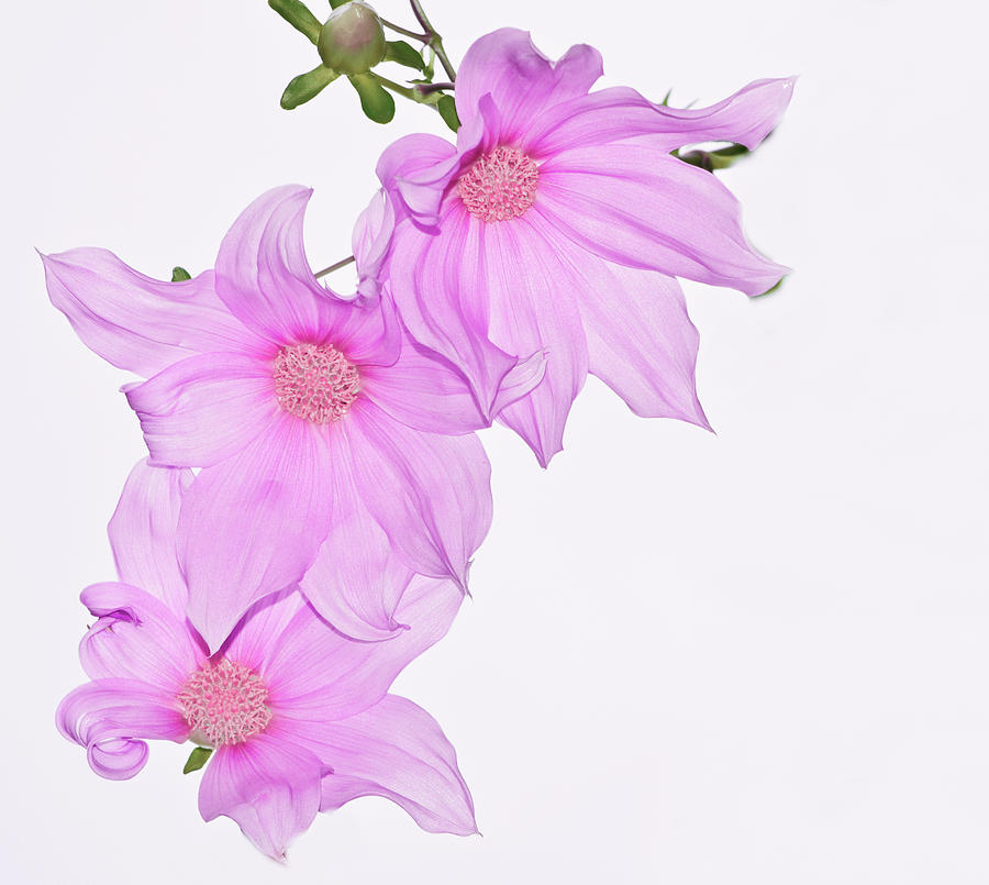 Flower Photograph - In The Pink by Kathryn Potempski