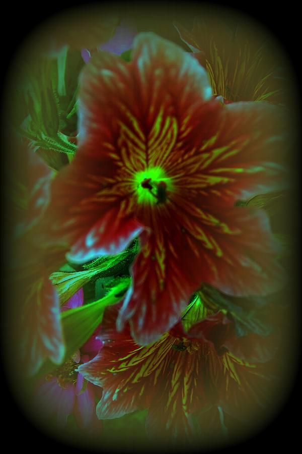 Flower Photograph - In The Realm Of Salpigloss.. by Rose Szautner