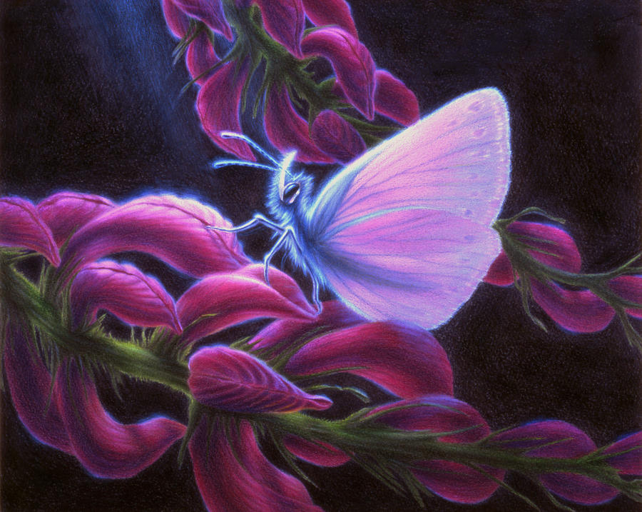 Butterfly Drawing - Inapertwa simple creatures by Shawn Kawa