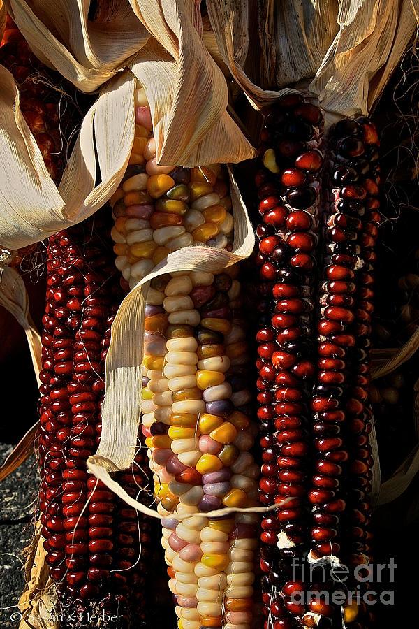 Autumn Photograph - Indian Corn by Susan Herber
