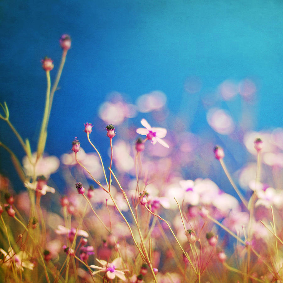 Impressionism Photograph - Infatuation In Blue  by Amy Tyler