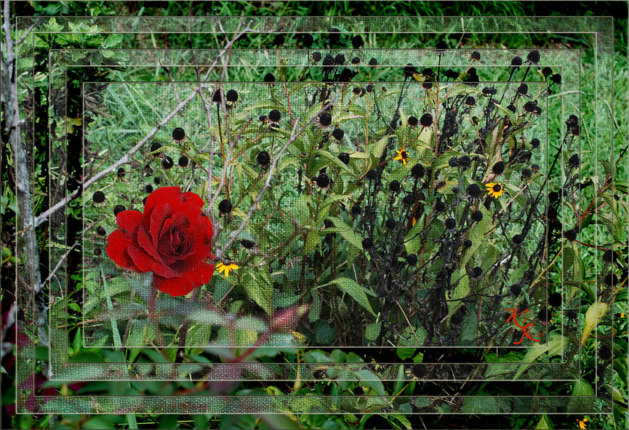 Background Photograph - Inner Layers by Kelly Rader
