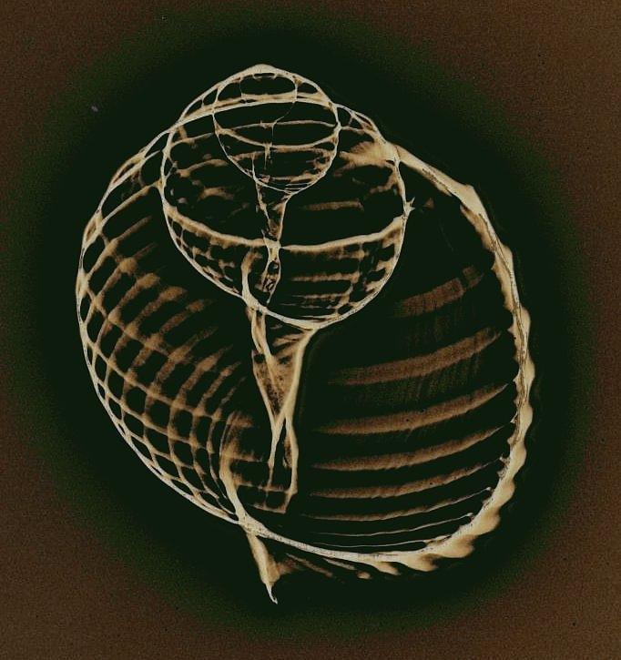 X Ray Photograph - Inner Worlds by Sara Koenig King