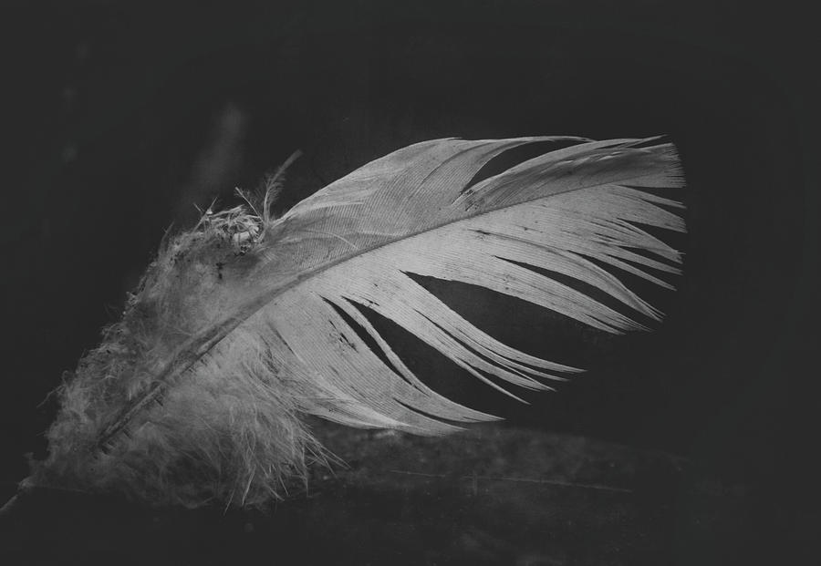 Feather Photograph - Innocence Lost by Odd Jeppesen