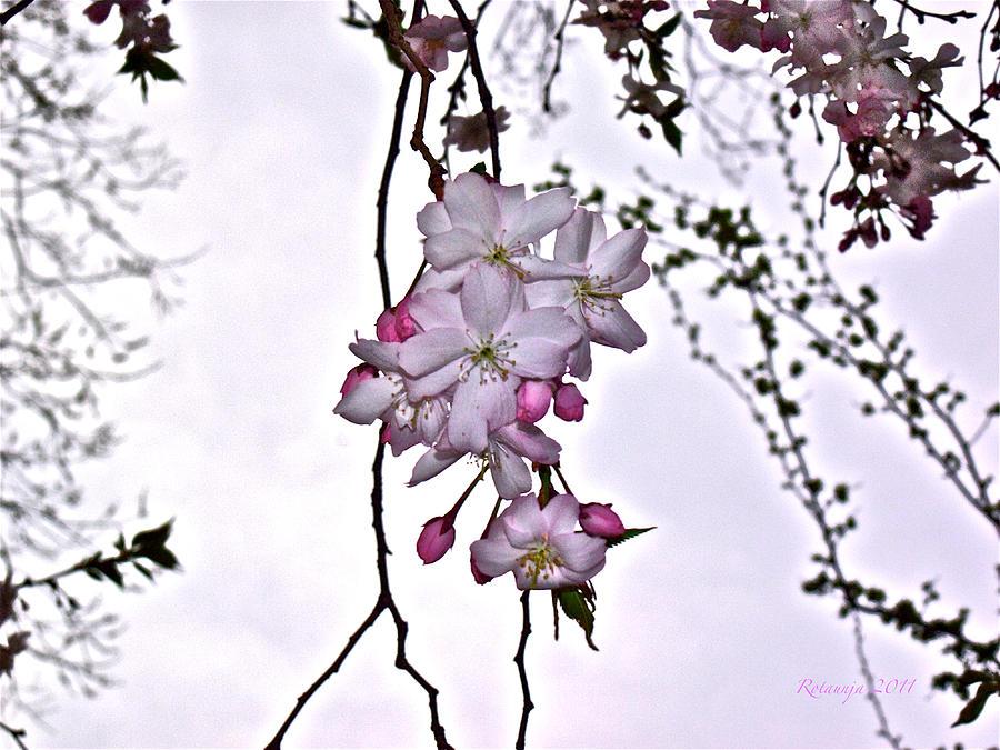 Flowers Photograph - Innocence by Rotaunja
