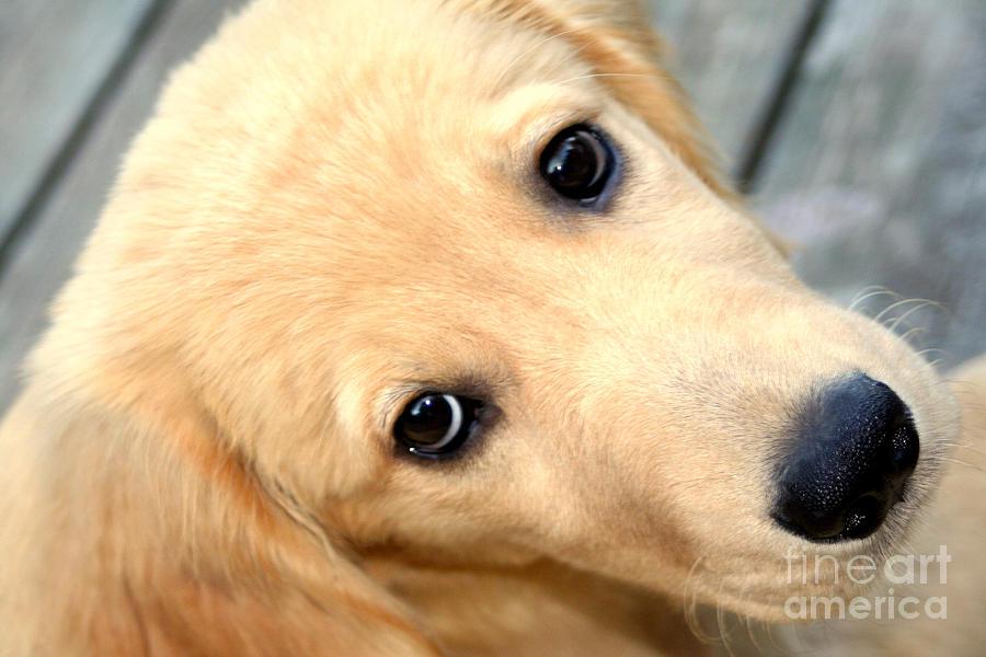 Animal Photograph - Innocent Abby by Susan Stevenson