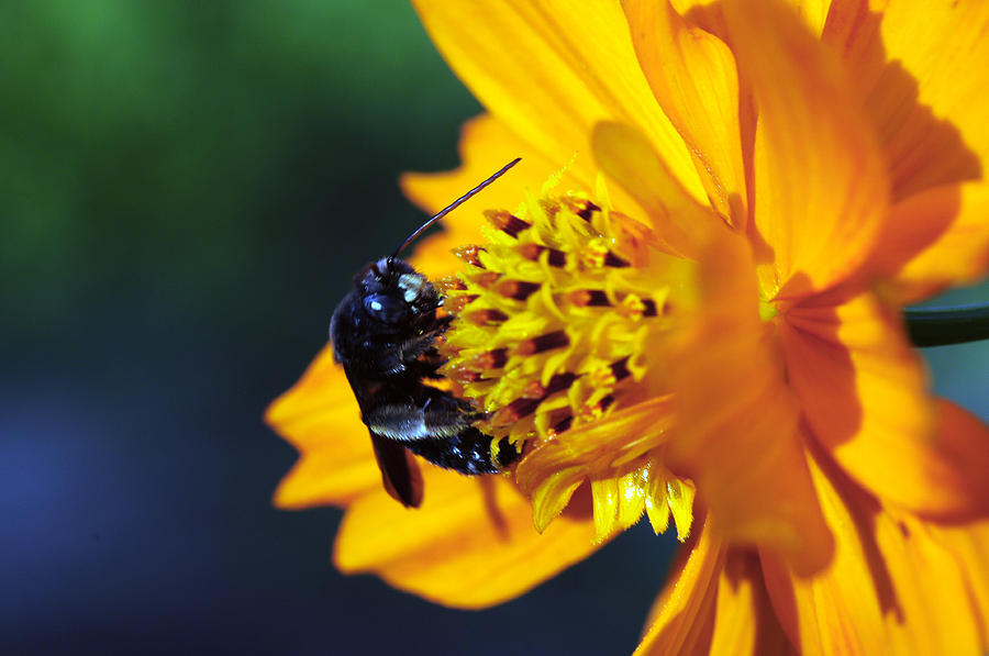 Wild Flower Photograph - Insect And The Wild One by Wanda Brandon