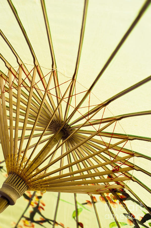 Background Photograph - Inside Of Parasol by Sam Bloomberg-rissman