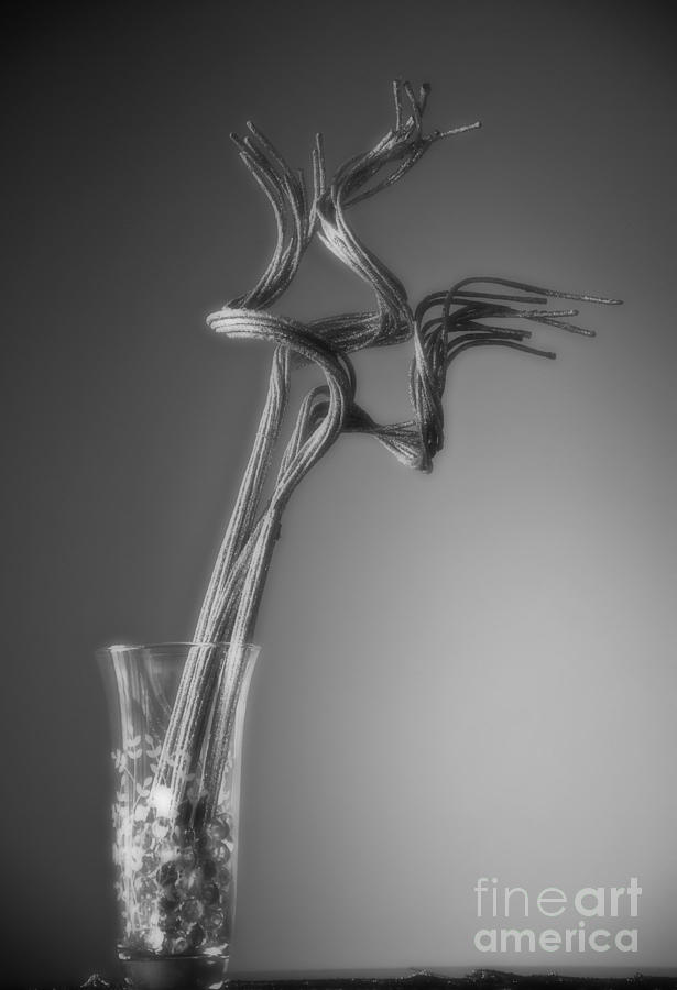 Vase Photograph - Insight by Fred Lassmann