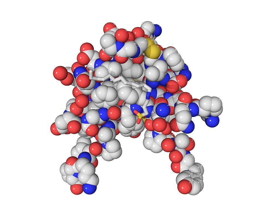 Insulin-like Growth Factor 1 Photograph - Insulin-like Growth 1 Factor Molecule by Laguna Design