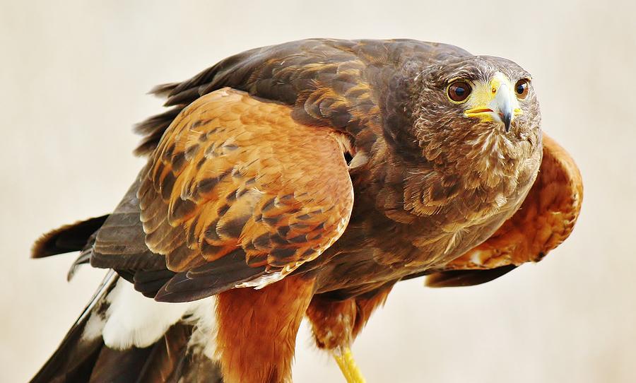 Bird Photograph - Intense by Paulette Thomas