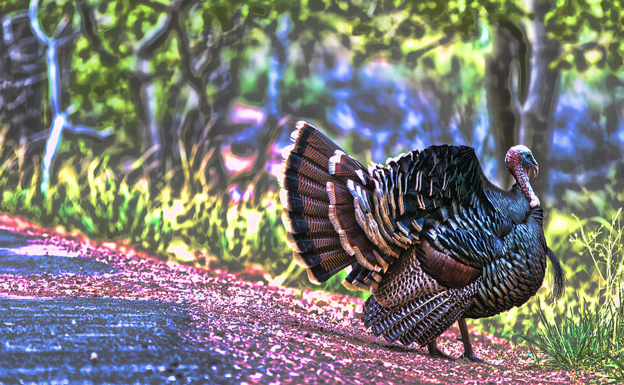 Zion National Park Tom Turkey Display Mating Digital Intense Nature Bird Avian Photograph - Intense Tom Turkey Display by Gregory Scott