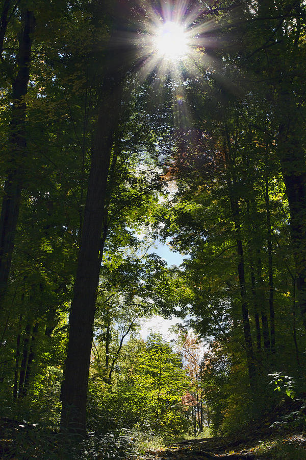 Fall Photograph - Into The Light by Peter Chilelli