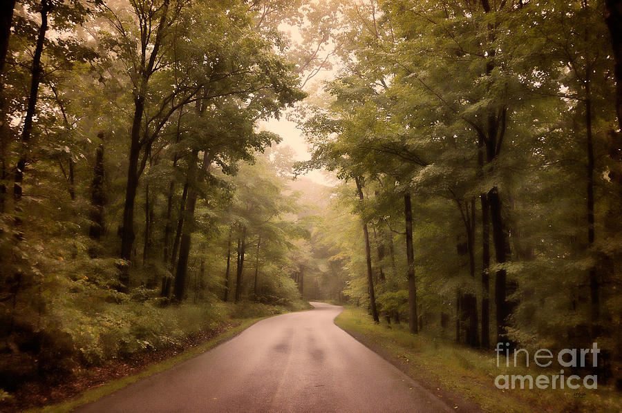 Road Photograph - Into The Mists by Lois Bryan