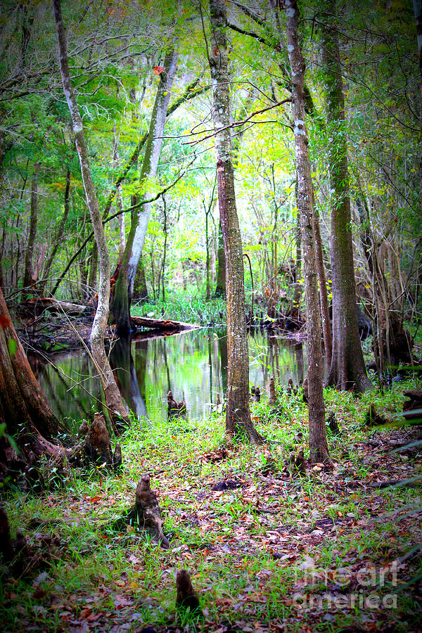Swamp Photograph - Into The Swamp by Carol Groenen