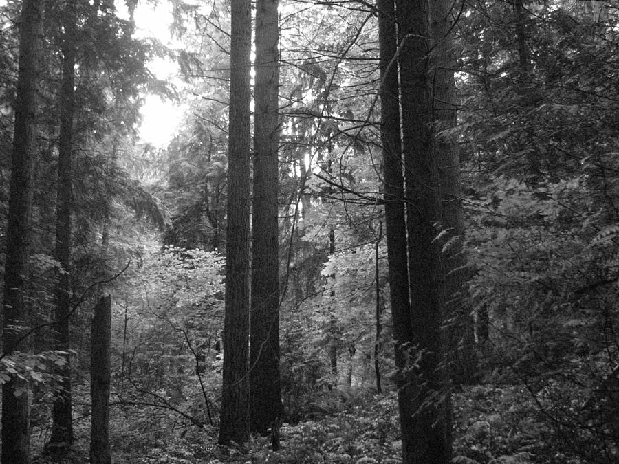 Northwest Photograph - Into The Wood by Kathleen Grace