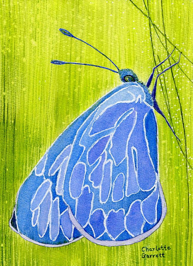 Intuition Butterfly by Charlotte Garrett