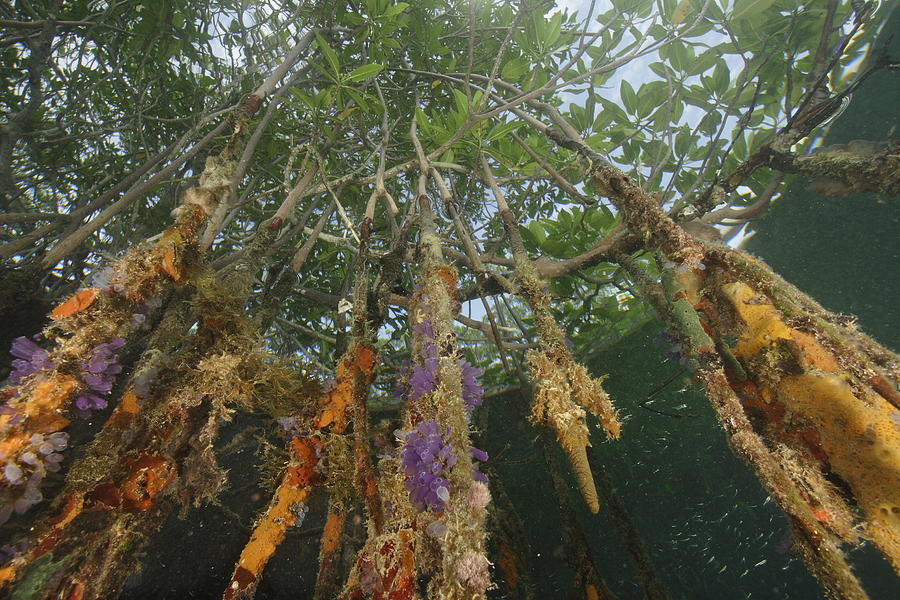 Invertebrate Life Growing On The Roots Photograph by Tim Laman