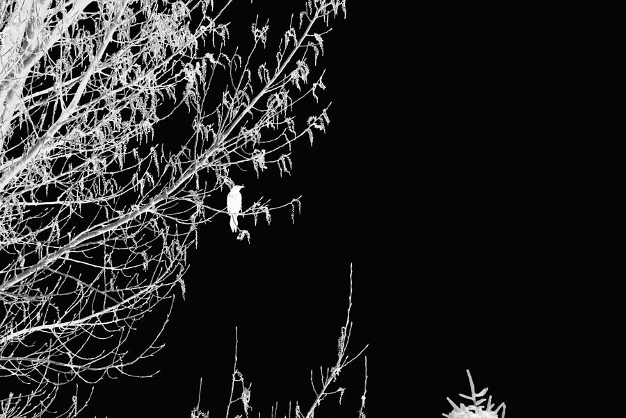 Superior Digital Art - Inverted Bird by Bill Kennedy