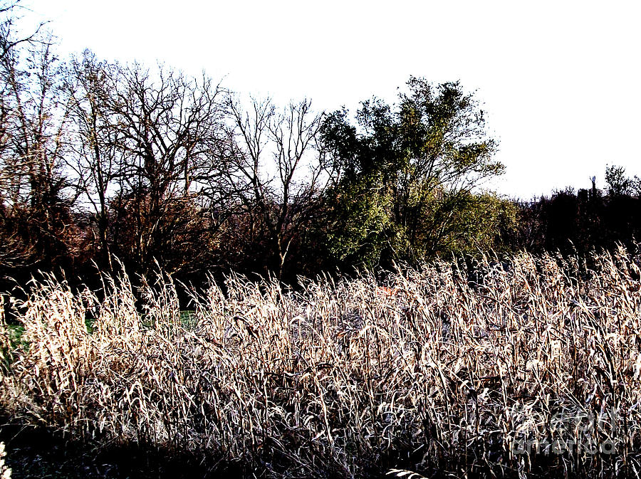 Photograph Photograph - Iowa Cornfield by Marsha Heiken