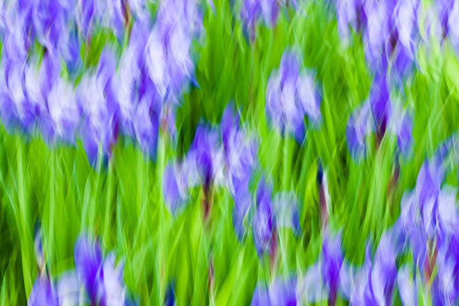 Abstract Photograph - Irises by Nancy Kennedy