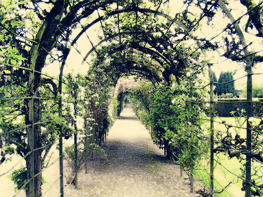 Archway Photograph - Irish Archway by Linde Townsend