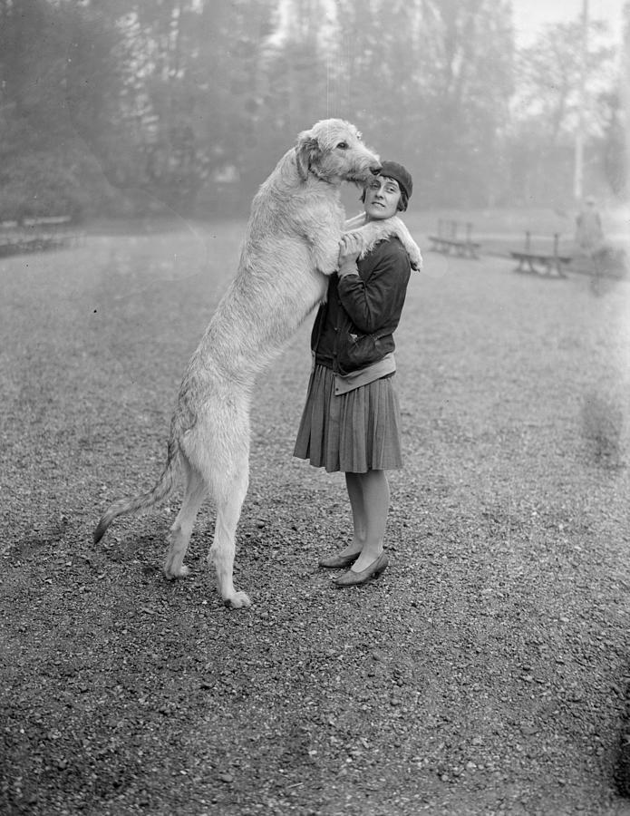 Adults Only Photograph - Irish Wolfhound by Bellamy
