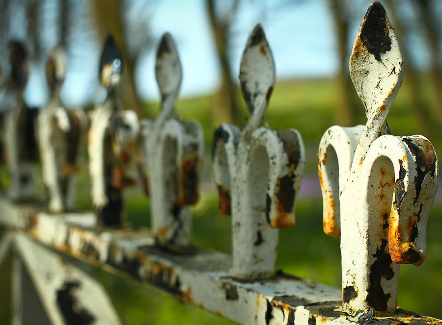 Iron Photograph - Iron Gate II by Jacqui Collett