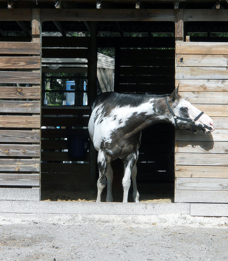 Horse Photograph - Is It Safe To Come Out by Judy Hall-Folde