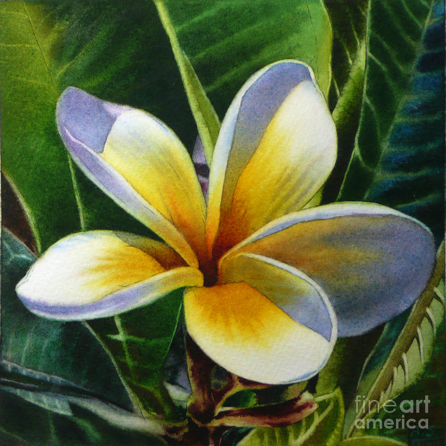 Island beauty white plumeria painting by arena shawn flower painting island beauty white plumeria by arena shawn izmirmasajfo