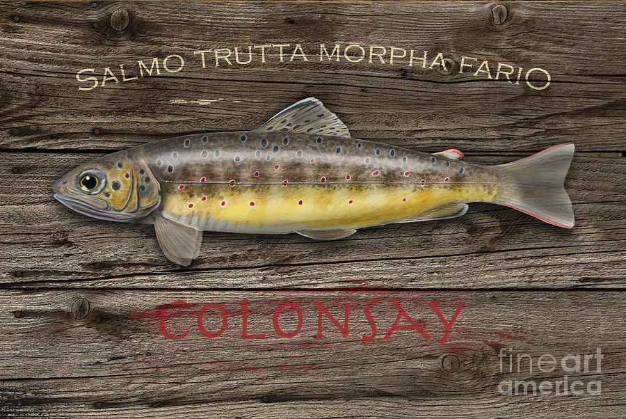 Isle Of Colonsay - Brown Trout Salmo Trutta - Hebrides - Islay - Jura - Skye - Mull - Fish Sign Painting