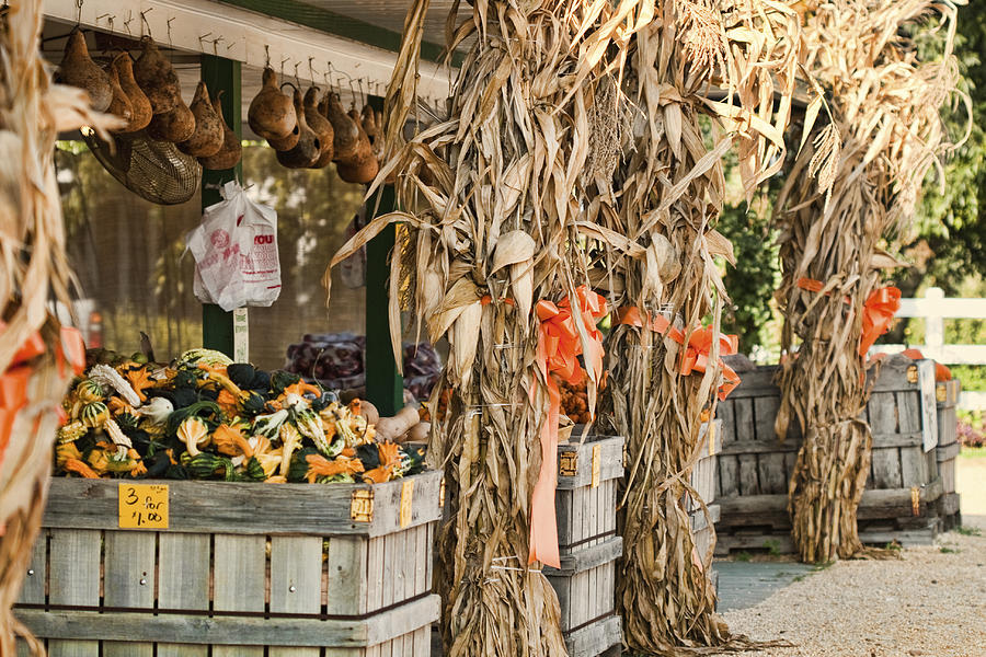 Produce Photograph - Isoms Orchard In Fall Regalia by Kathy Clark