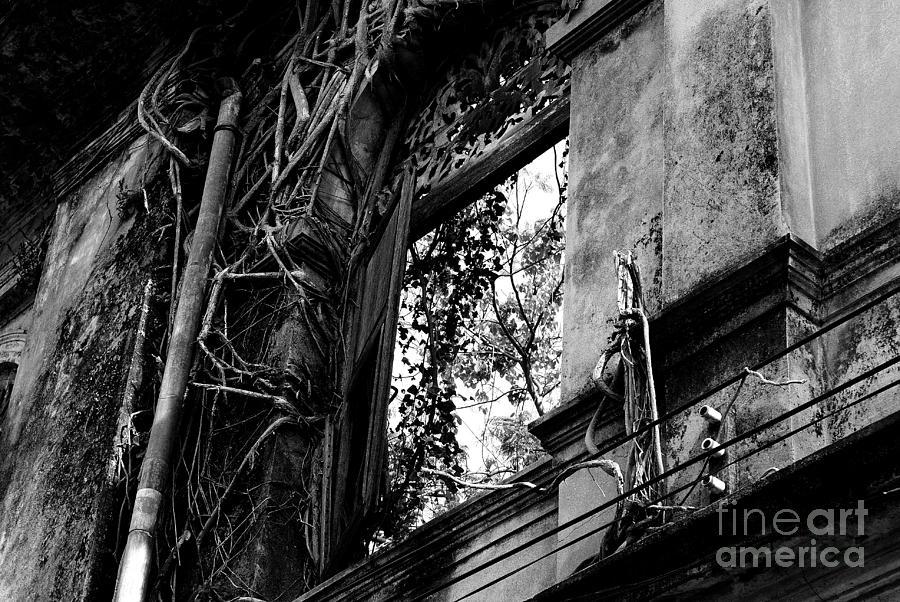 Window Photograph - It Grows by Dean Harte