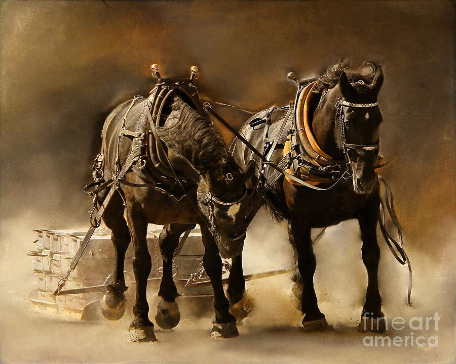 Horse Photograph - It Takes Two by Davandra Cribbie