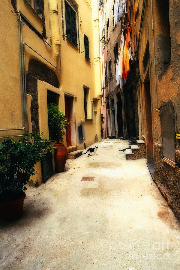 Cat Photograph - Italian Alley Kitty by Virginia Furness