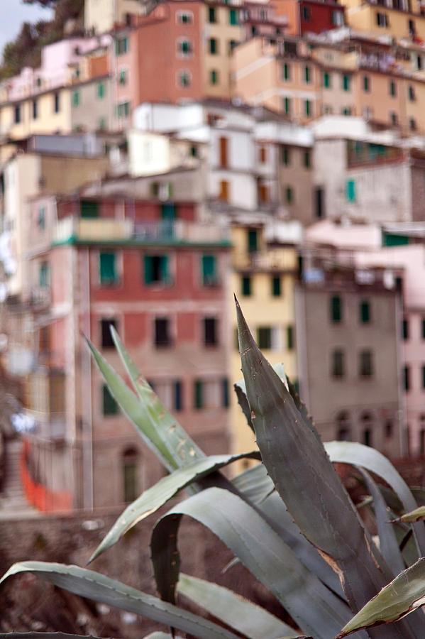 Riomaggiore Photograph - Italian Aloe by Mike Reid