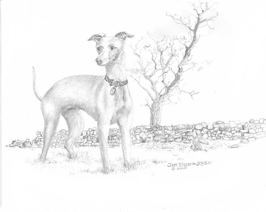 italian greyhound drawing by jim hubbard