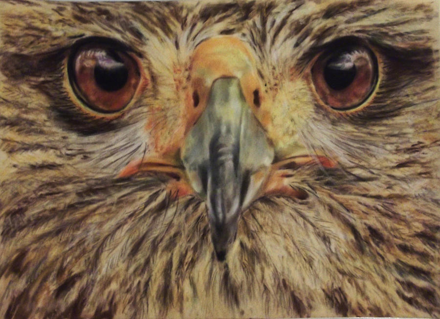 Owl Painting - Its A Hoot by Tanya Patey