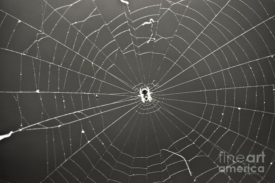 Spider Photograph - Itsy Bitsy Spider by Leslie Leda