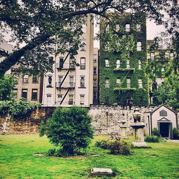 New York City Photograph - Ivy-covered Dreams - New York City by Vivienne Gucwa