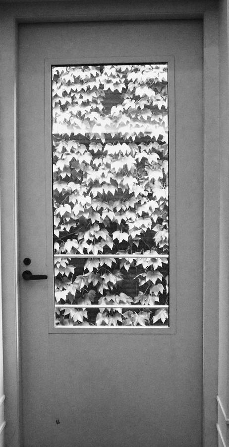 Ivy Photograph - Ivy Door by Anna Villarreal Garbis