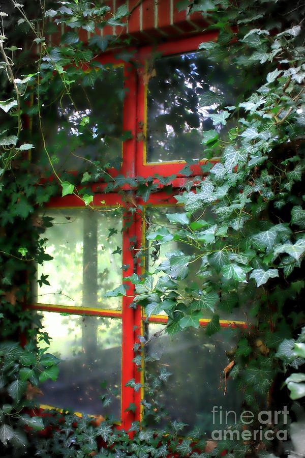 Window Photograph - Ivy Embrace by Carol Groenen