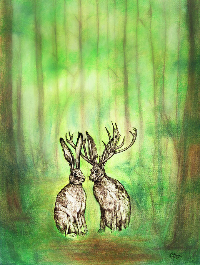 Jackrabbit Drawing - Into The Woods by Carrie Jackson
